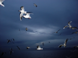 White gulls caught suspended in mid air over the sea