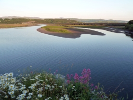 Flowers at the edge of a calm bay with hills in the distance