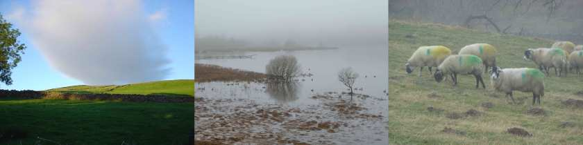 A triptych of photos shows, from left to right, a pinkish cloud seems to rest on the top of a green hill, a misty marine landscape with dry trees and ducks, a herd of sheep stand in a field, their coats daubed with green and yellow paint.