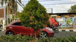 Yogyakarta street, with small red car driving in front of a leafy tree, with motorbike and street art marked corrugated steel in the background.