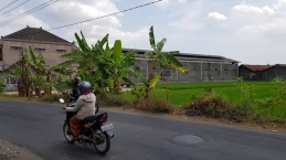 Motorbike riders pass each other on a road beside sugar can factory with banana trees